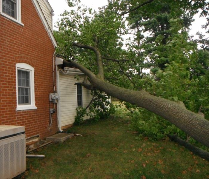 Albany Storm Damage – Fallen Tree Branch  Before