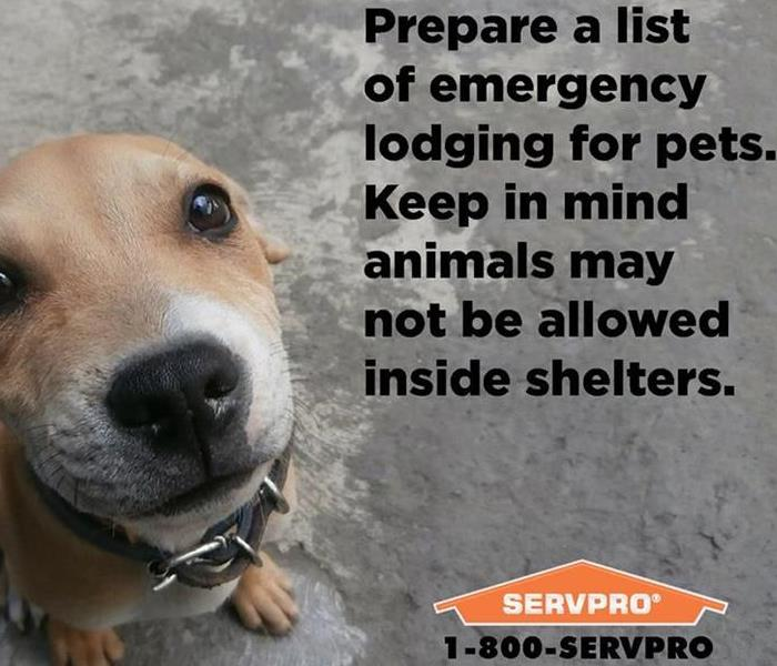 call SERVPRO of Albany and Americus at (229) 439-2048 - image of dog